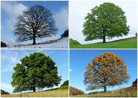 This image has an empty alt attribute; its file name is 4SEASONS.jpg